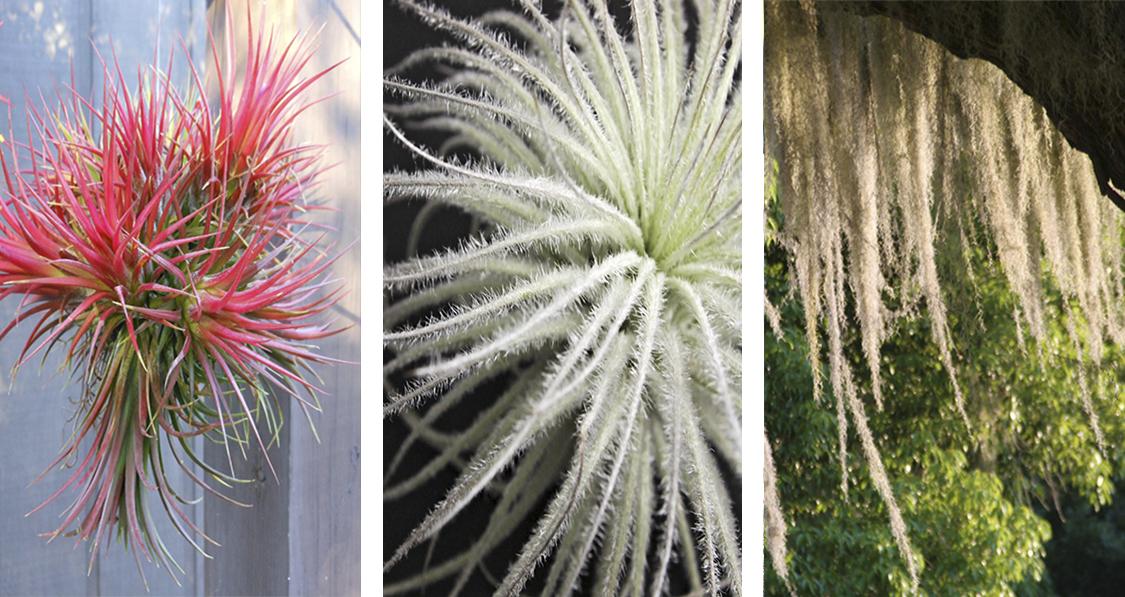 air-plants-na-decoracao-da-casa-dani-noce-1