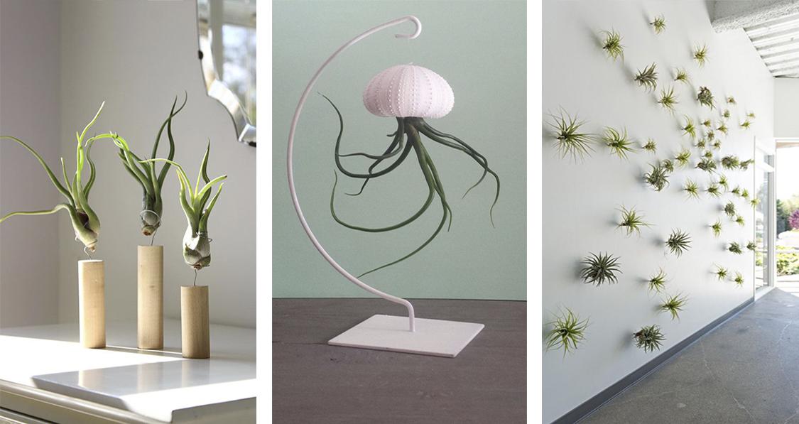 air-plants-na-decoracao-da-casa-dani-noce-2