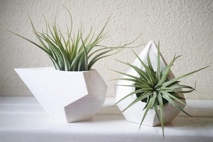 imagem-destaque-air-plants-dani-noce