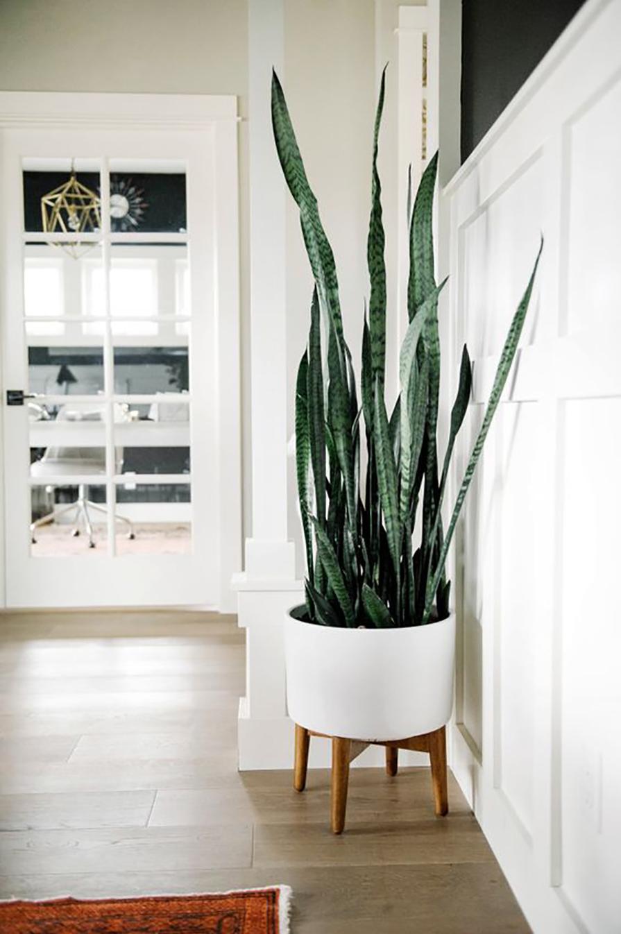 plantas-para-preguicosos-danielle-noce-1