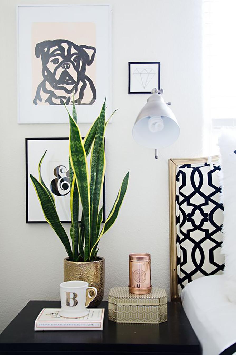 plantas-para-preguicosos-danielle-noce-2