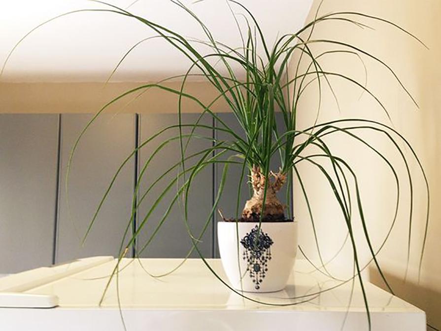 plantas-para-preguicosos-danielle-noce-3