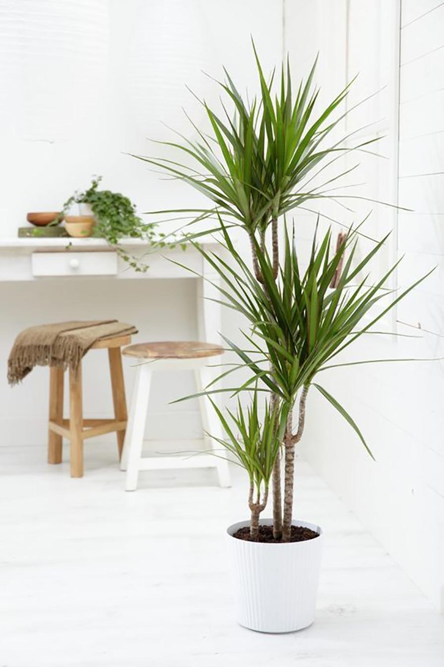 plantas-para-preguicosos-danielle-noce-5