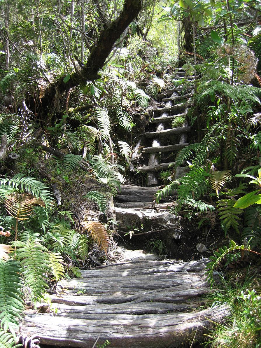parque-pumalin-conheca-mais-sobre-o-projeto-de-preservacao-ambiental-no-chile-danielle-noce-4