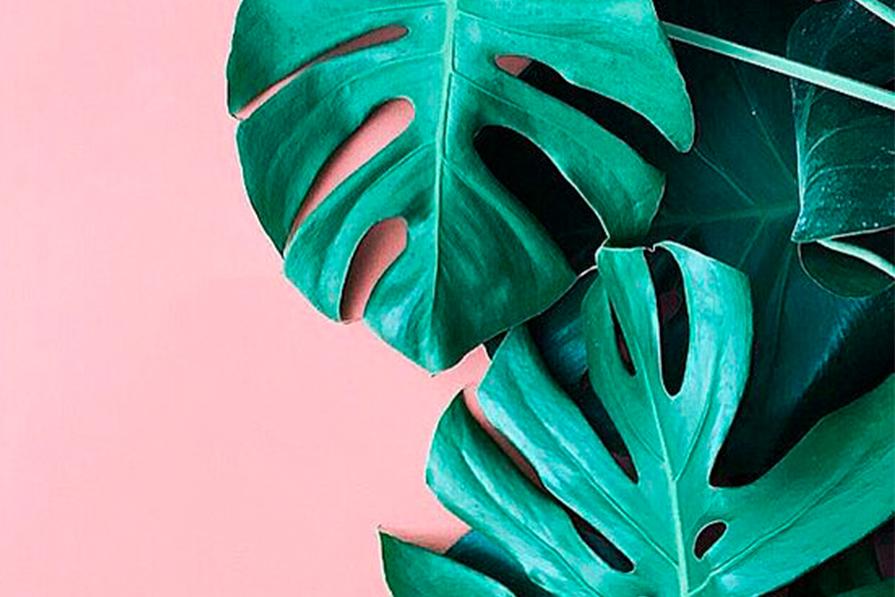 tropical-vibes-folhagem-monstera-palmeira-estampa-decoracao-danielle-noce-imagem-destaque7
